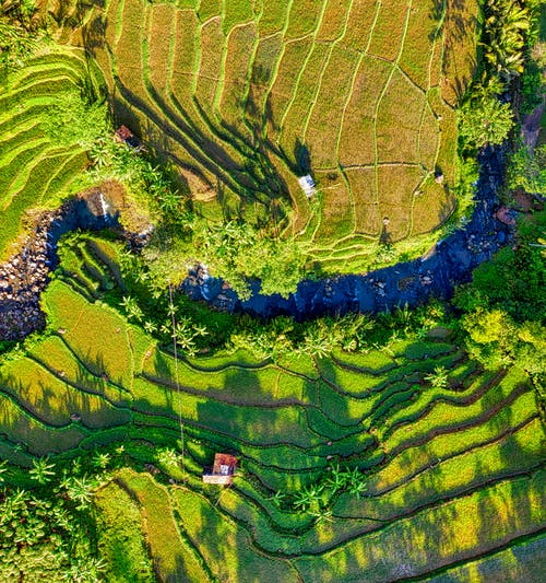 Drone view of river flowing through terraced plantations with rows of fields located in tropical countryside in sunlight
