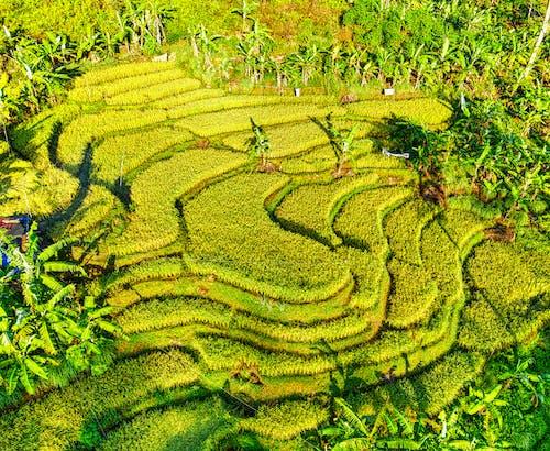 Foto profissional grátis de abundância, aéreo, agricultura