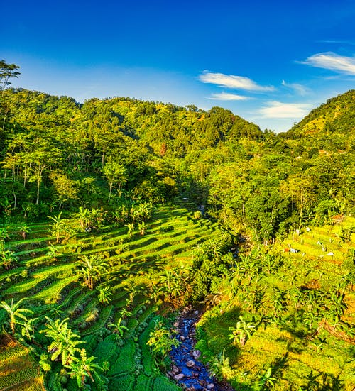 Drone view of rice paddy terraces with river flowing through palms and tropical forest