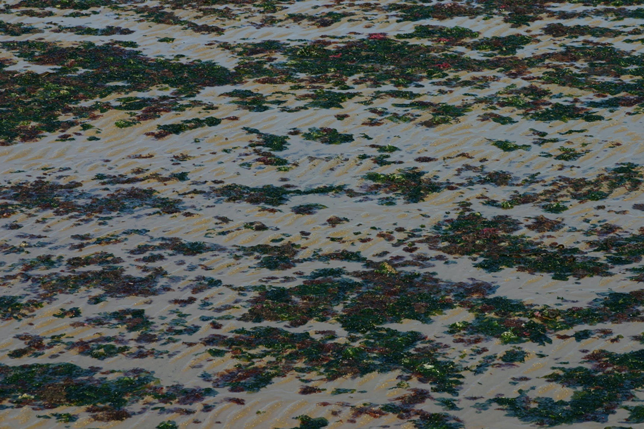 Free stock photo of algues