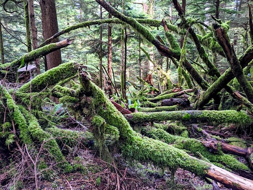 Free stock photo of broken branches, canada, environment