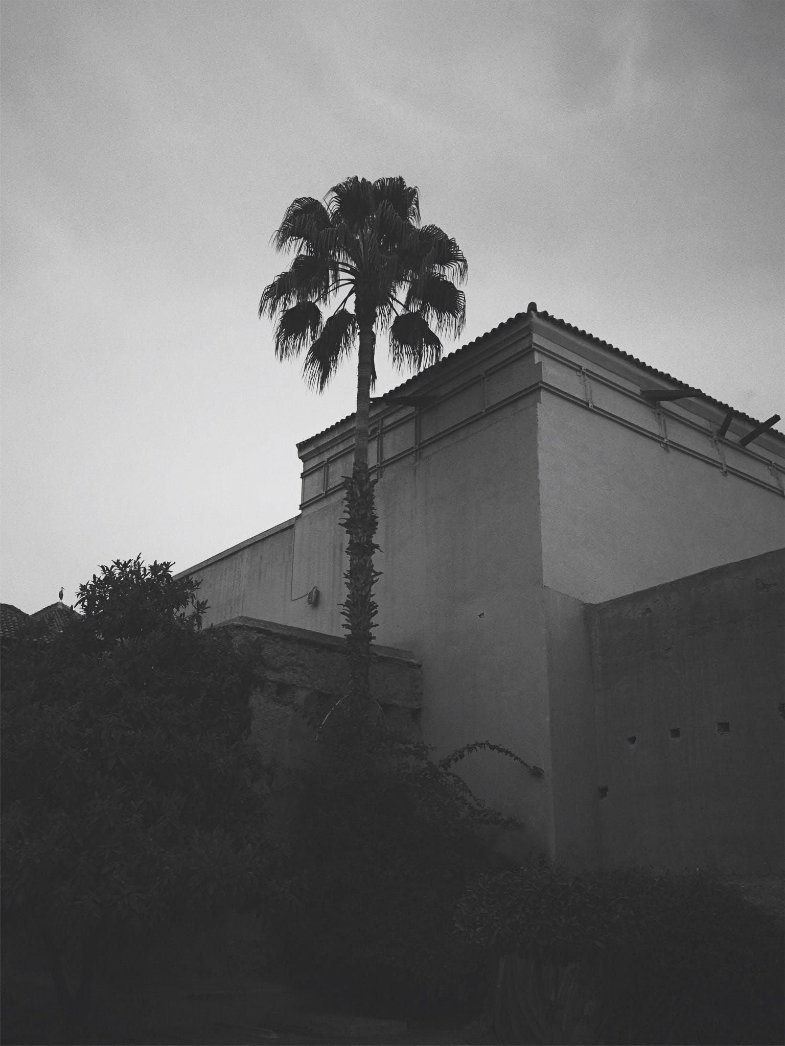Kostenloses Stock Foto zu architektur, marrakesch, palme