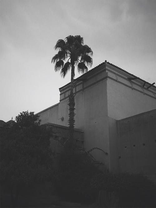 Free stock photo of architecture, Marrakesh, palm tree
