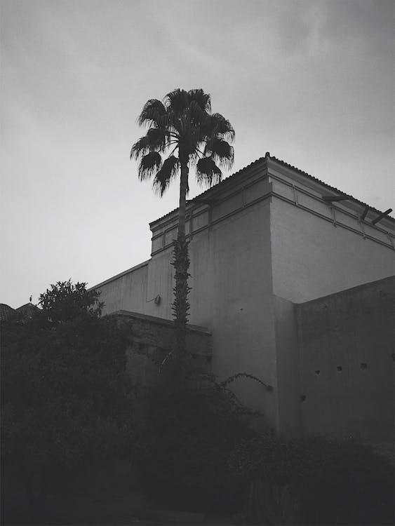 architettura, marrakesh, palma