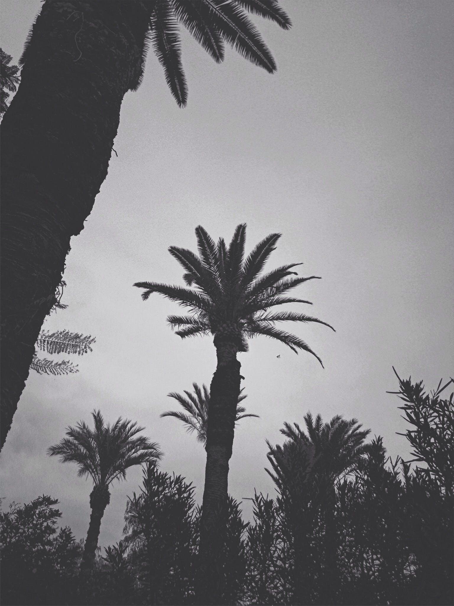 Kostenloses Stock Foto zu marrakesch, palmen