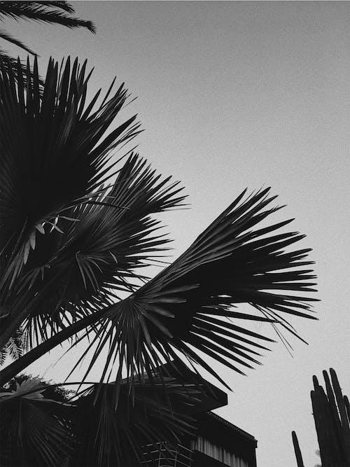 Fotos de stock gratuitas de cielo, naturaleza, nubes, palma