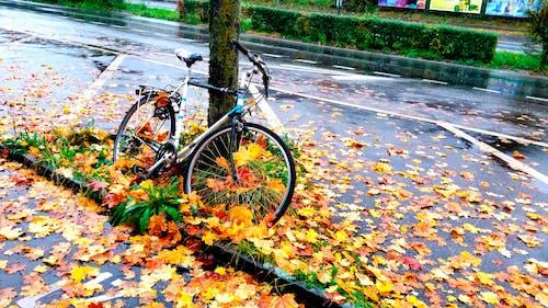 Ảnh lưu trữ miễn phí về sau cơn mưa, Xe đạp