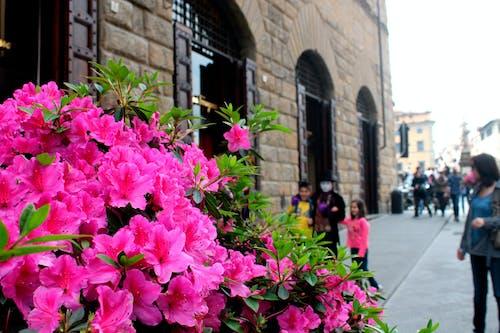 Immagine gratuita di città, cittadina, concentrarsi, fiore