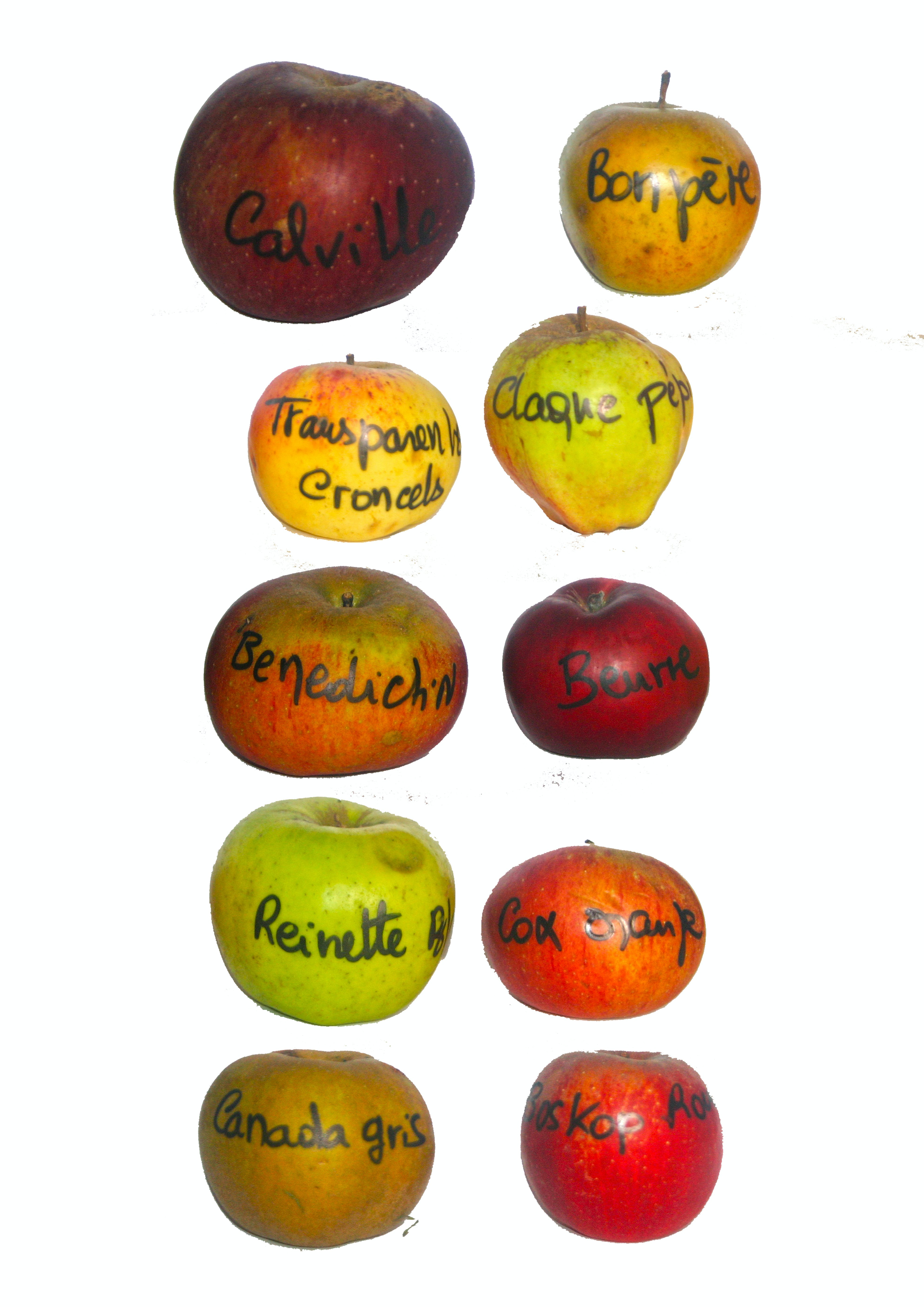 Free stock photo of pommes