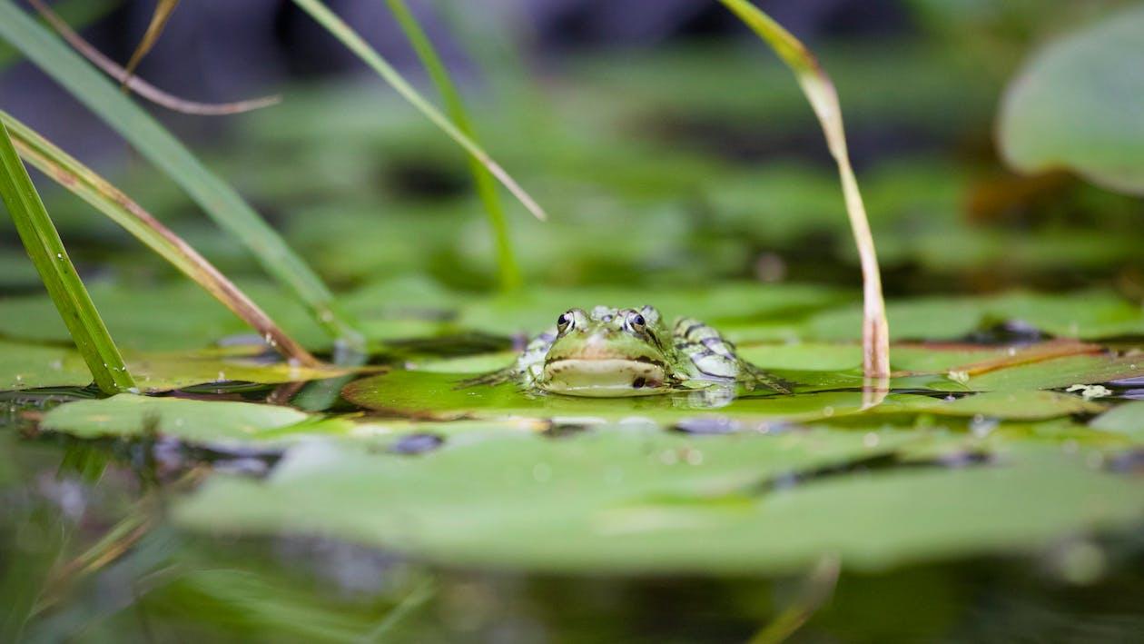 matthiaszomer.com, 녹색, 녹색 개구리