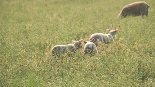 คลังภาพถ่ายฟรี ของ การถ่ายภาพสัตว์, ทารก, ทุ่งหญ้า, ทุ่งหญ้าแห้ง