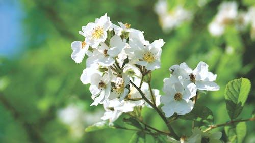 คลังภาพถ่ายฟรี ของ กลีบดอก, การเจริญเติบโต, กำลังบาน, ความชัดลึก