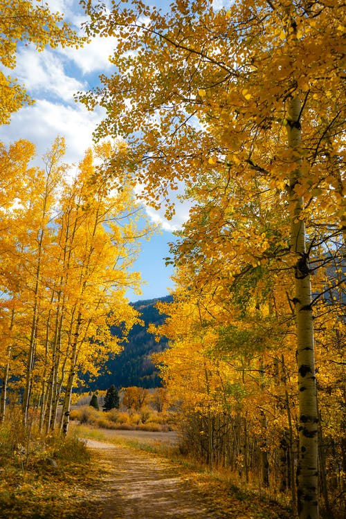 Photos gratuites de arbres, campagne, colorado