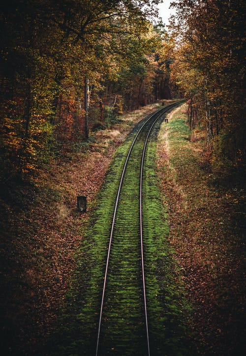 Green Train Rail in the Forest