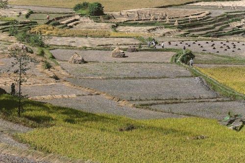 乾草, 乾草堆, 冷靜 的 免費圖庫相片
