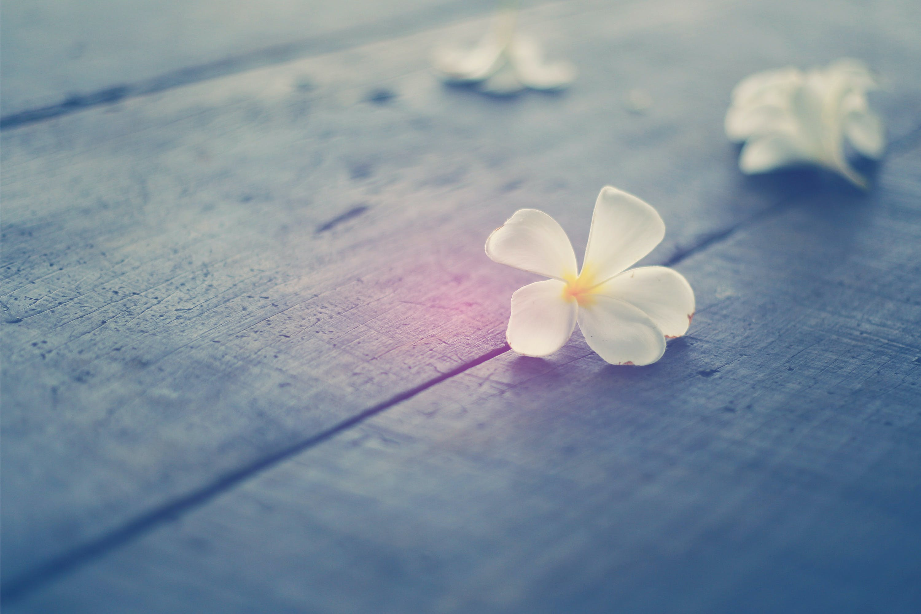 White Plumeria Flowers on the Floor