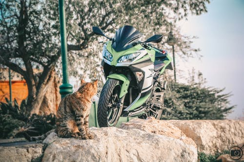Free stock photo of cat, motorcycle