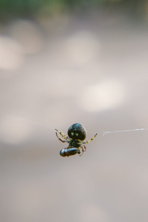 Small spider on thin web in daylight