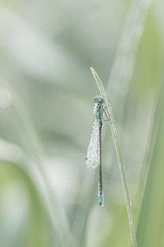 Kostenloses Stock Foto zu natur, gras, umwelt, insekt