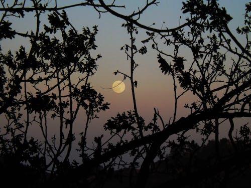 나무, 슈퍼 문, 오렌지 달, 일몰의 무료 스톡 사진