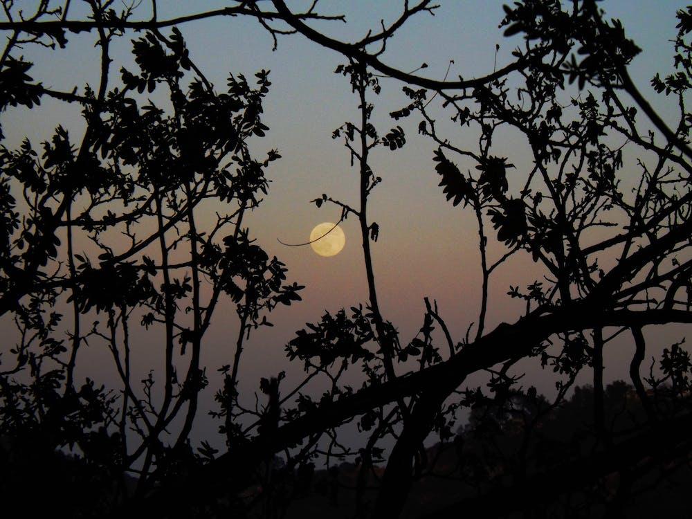 나무, 슈퍼 문, 오렌지 달