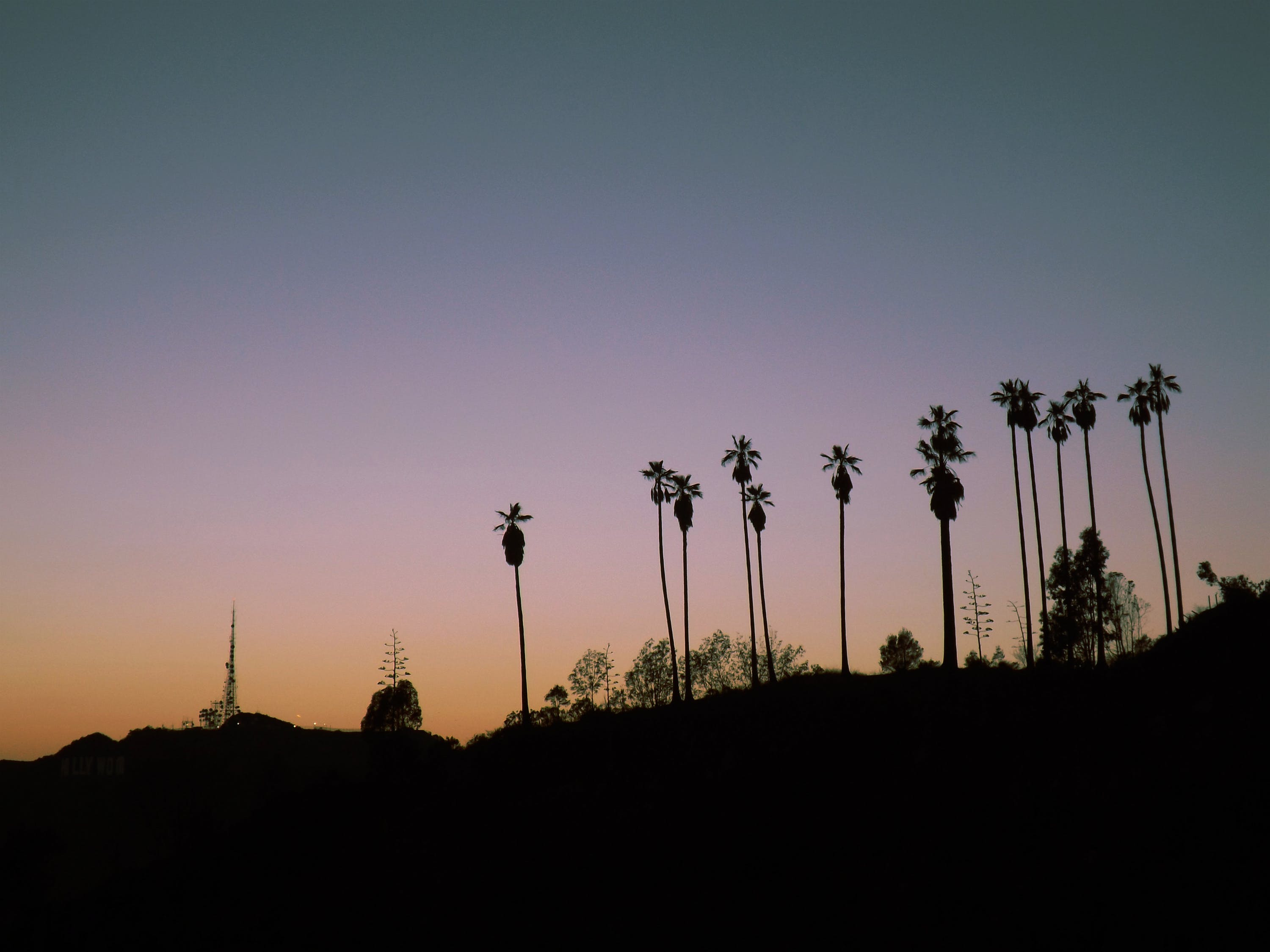 Silhouette Photo of Line Palm Trees