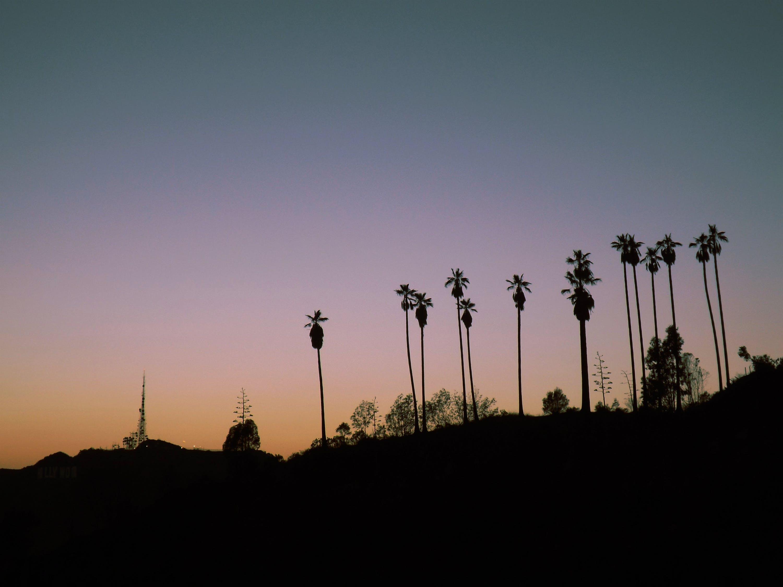 bäume, gradient, hollywood