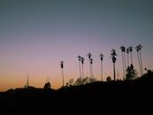 sunset, los angeles, trees