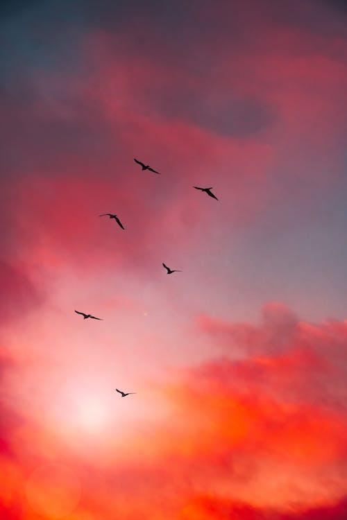 Free stock photo of beautiful scenery, beautiful sky, beautiful sunset