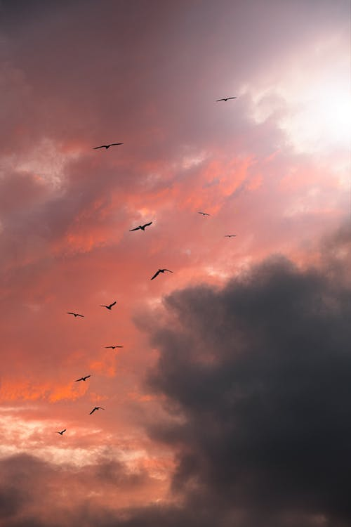 Free stock photo of atmosphere, background image, beautiful sky