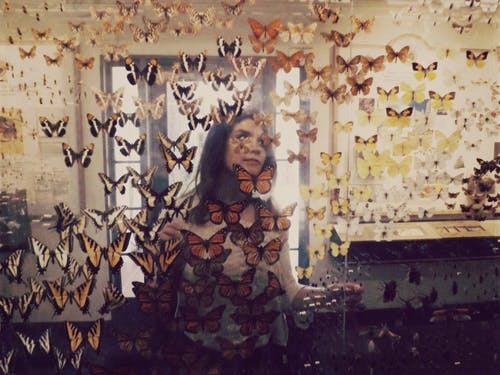 나비, 소녀, 초상화의 무료 스톡 사진