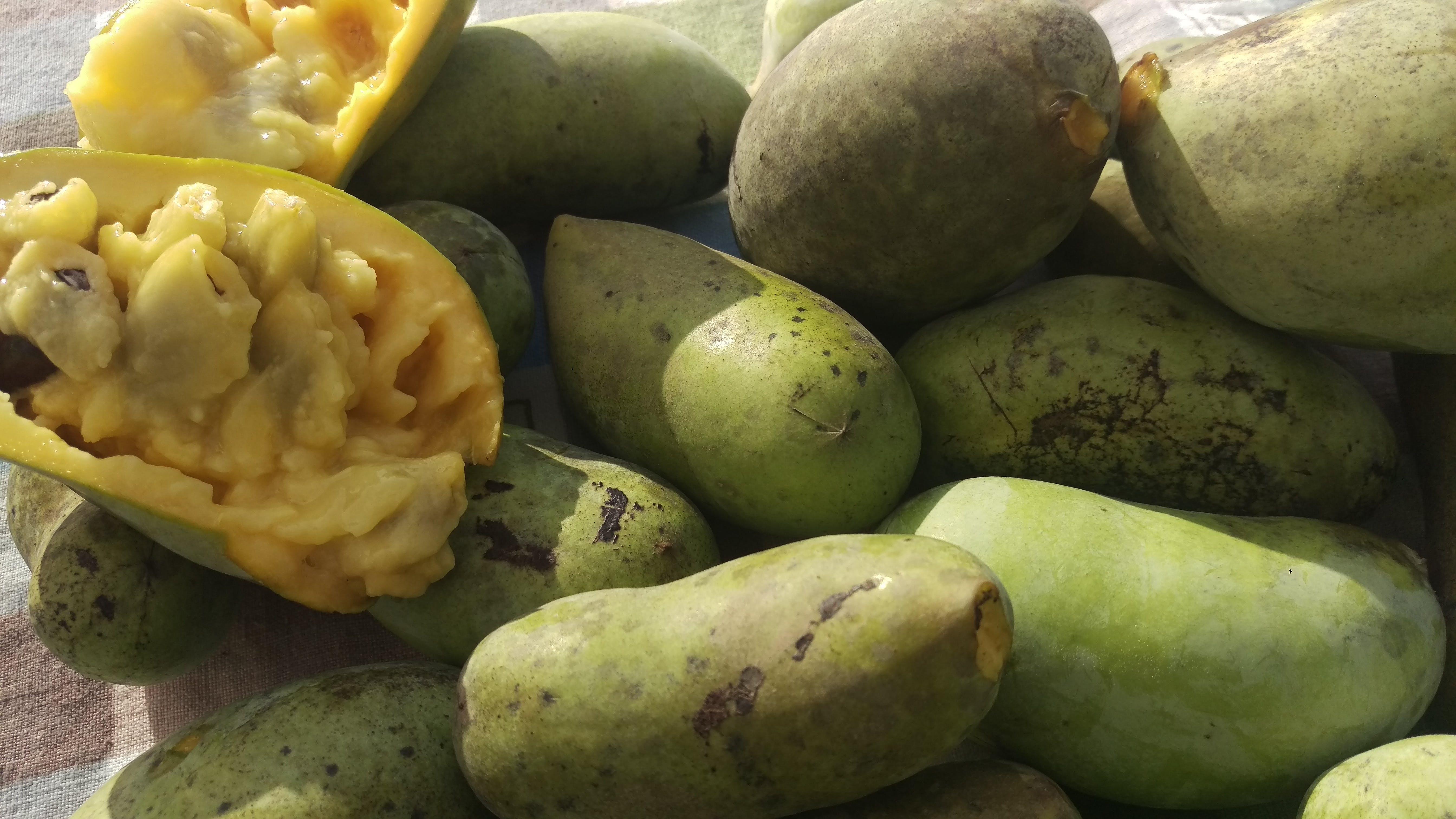 Kostenloses Stock Foto zu einheimische früchte, ohio staatliche frucht, pawpaw