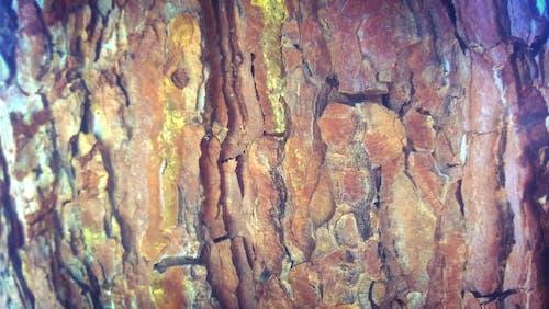 Free stock photo of nature, tree, umarjon