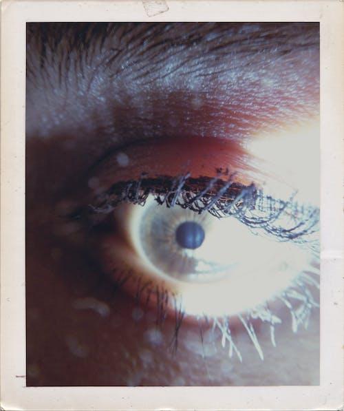 눈, 속눈썹의 무료 스톡 사진