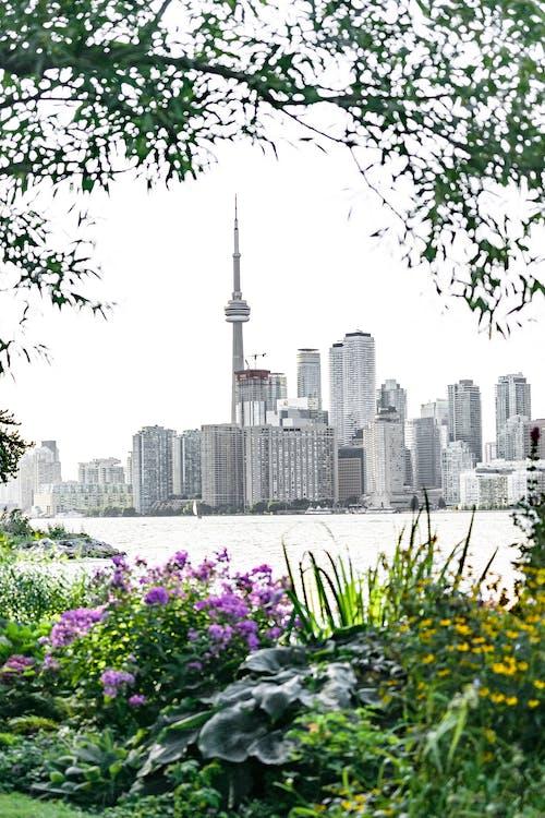Бесплатное стоковое фото с башня, вода, горизонт, город
