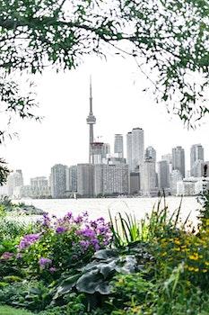 Free stock photo of city, water, skyline, flowers