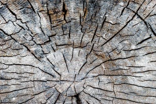 Foto stok gratis batang pohon, garis, gersang, kasar