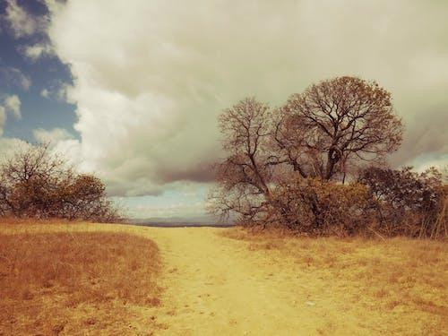 Základová fotografie zdarma na téma mraky, obloha