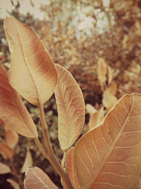 나뭇잎, 십일월