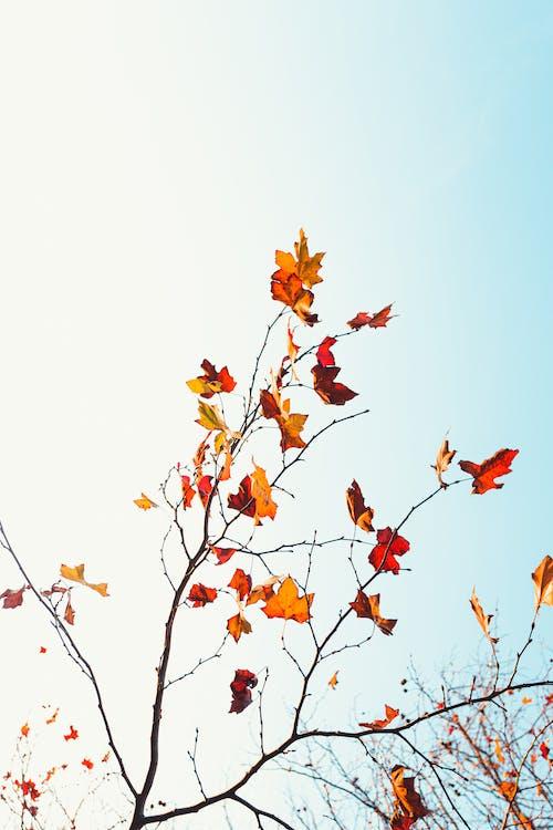 Foto stok gratis cabang, daun, di luar rumah, flora