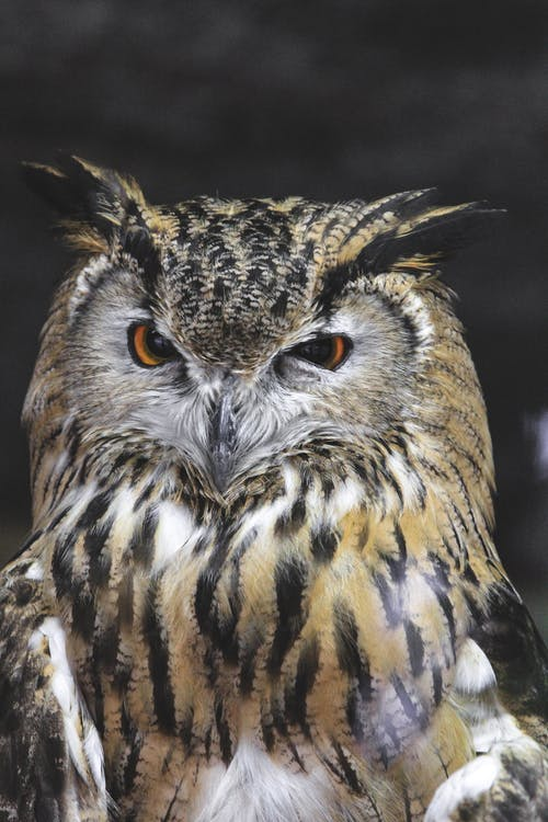 Serious eagle owl sitting in wild nature
