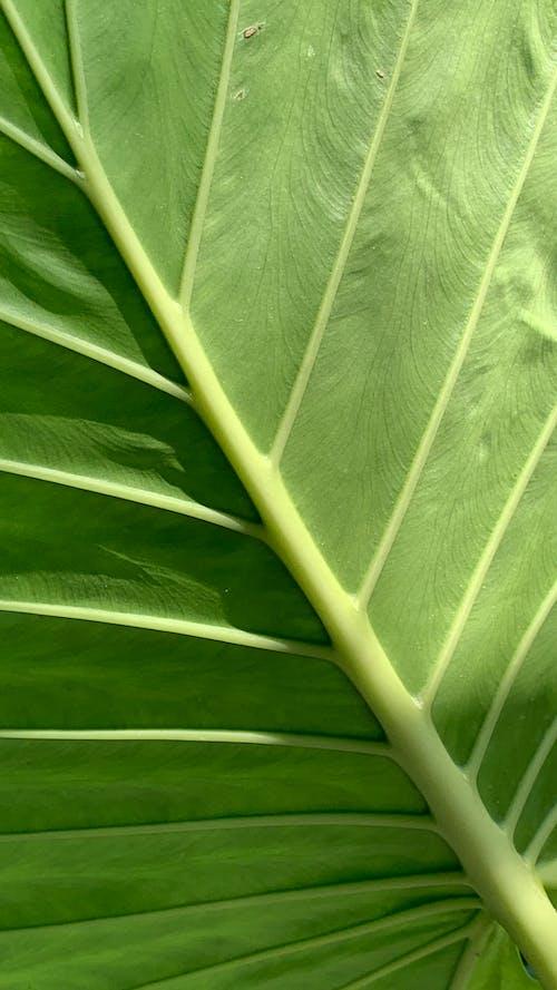 Immagine gratuita di botanico, foglia verde, fotosintesi