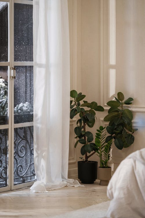 Green Potted Plant Beside White Window Curtain