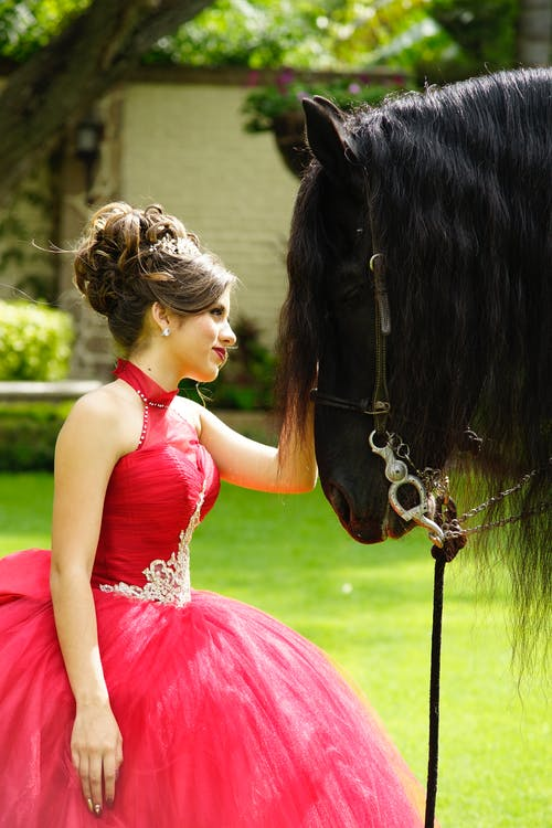 Woman in Pink Dress Holding Black Horse