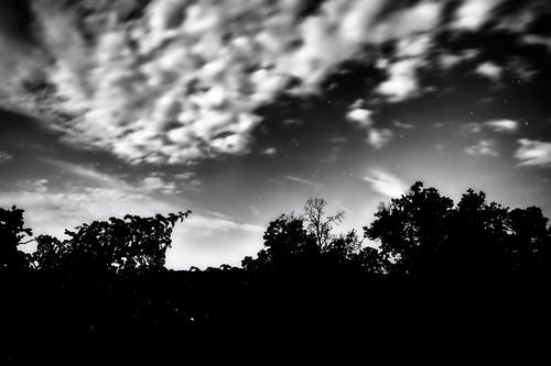 Δωρεάν στοκ φωτογραφιών με ασπρόμαυρη φωτογραφία, αστέρια, δέντρα
