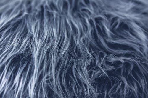 Gratis stockfoto met grijs, structuur, textuur, vacht