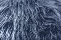 texture, grey, fur