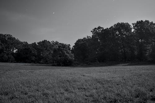 나무, 달빛, 밤의 무료 스톡 사진
