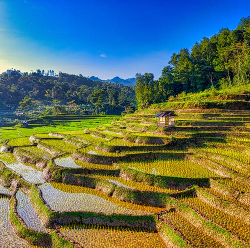 Hill with terraces for cultivating rice swamp grass as source of food in Asian among green woods