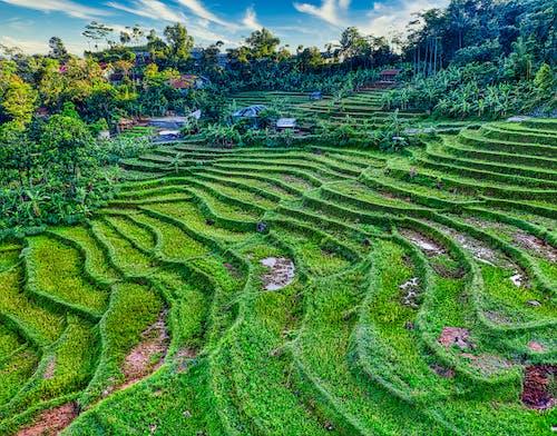 Foto profissional grátis de abundância, acordo, agricultura